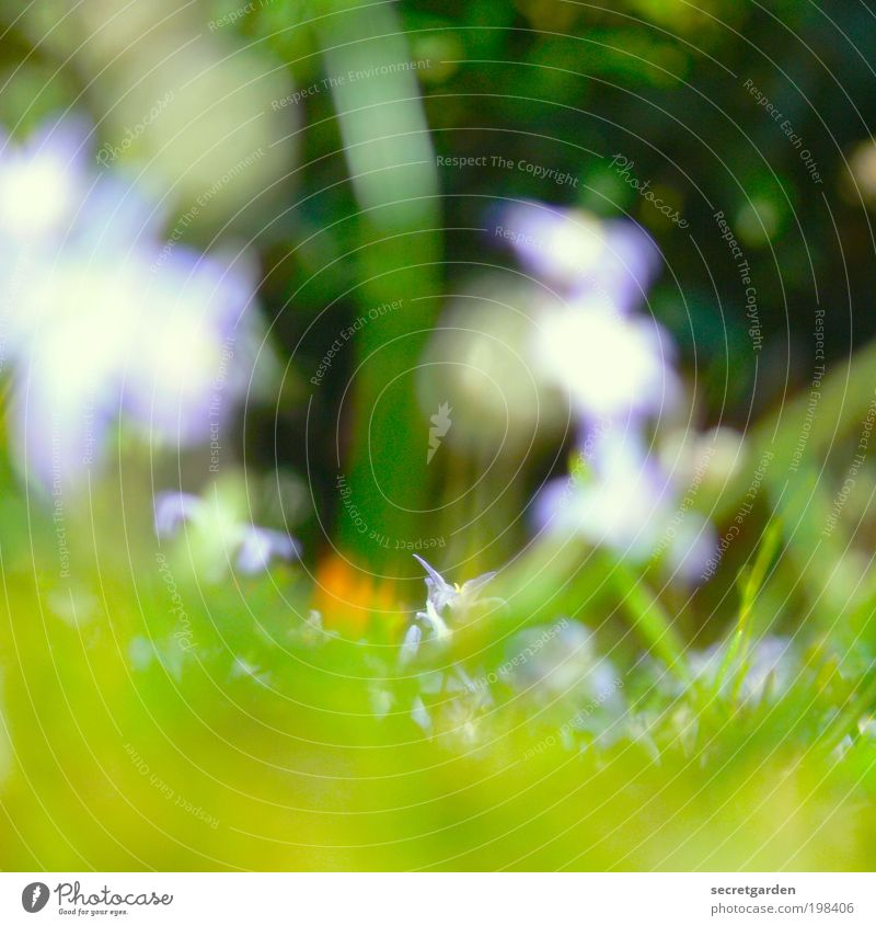 Five dioptres. Summer vacation Gardening Environment Nature Plant Spring Grass Blossom Park Meadow Blossoming Blue Green Red Spring fever Perspective