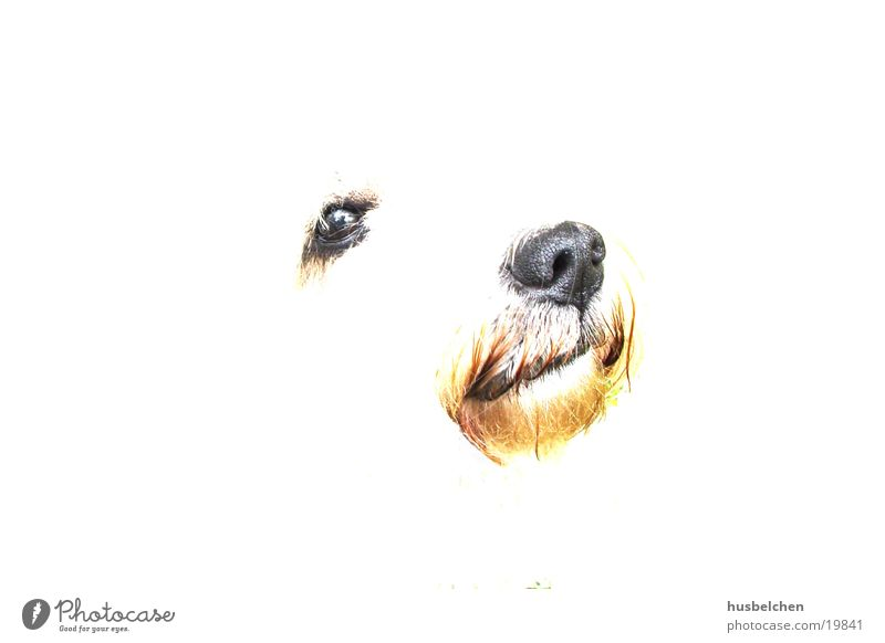 bingo Dog White Nose Eyes