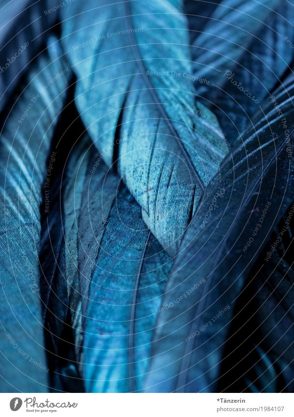 blue shimmer Bird Feather Esthetic Blue Attentive Calm Colour photo Subdued colour Macro (Extreme close-up) Structures and shapes Deserted Evening Blur