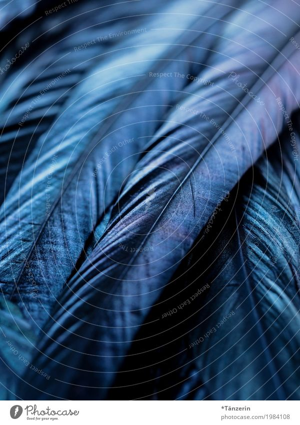 blue Bird Wing Feather Esthetic Natural Blue Colour photo Subdued colour Macro (Extreme close-up) Deserted Evening Reflection Blur Shallow depth of field