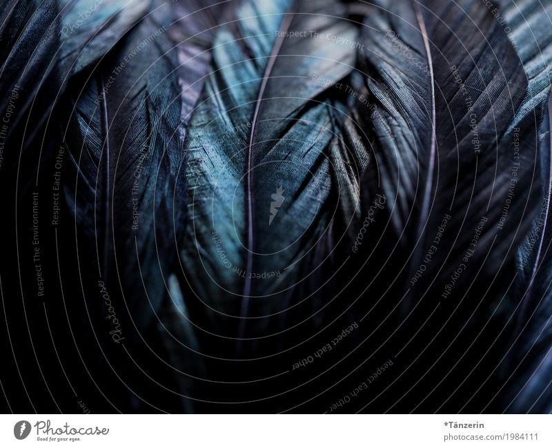 feathers Wing Feather Esthetic Dark Natural Beautiful Blue Black Colour photo Subdued colour Detail Deserted Blur Shallow depth of field
