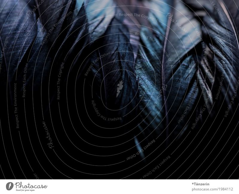 shades of black Bird Wing Feather Esthetic Dark Near Blue Green Violet Black Colour photo Subdued colour Detail Macro (Extreme close-up) Deserted Evening Night
