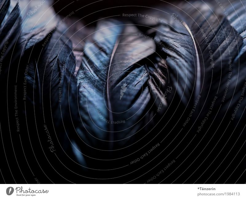 shades of black Bird Wing Feather Exceptional Dark Glittering Creepy Beautiful Blue Black Silver Colour photo Subdued colour Close-up Macro (Extreme close-up)