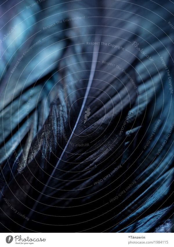 Iridescent Wing Feather Esthetic Attentive Calm Colour photo Subdued colour Macro (Extreme close-up) Deserted Evening Night Reflection Blur