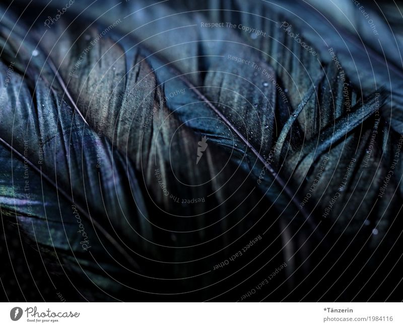 Iridescent Wing Feather Esthetic Dark Blue Black Silver Colour photo Subdued colour Macro (Extreme close-up) Deserted Night Reflection Blur