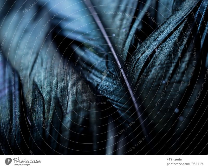 feathers Feather Esthetic Dark Natural Beautiful Blue Colour photo Subdued colour Detail Macro (Extreme close-up) Deserted Blur Shallow depth of field