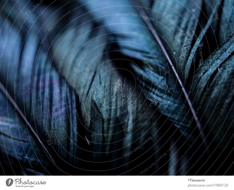 feathers Animal Wing Feather Esthetic Dark Beautiful Blue Colour photo Subdued colour Exterior shot Detail Macro (Extreme close-up) Deserted Evening Shadow