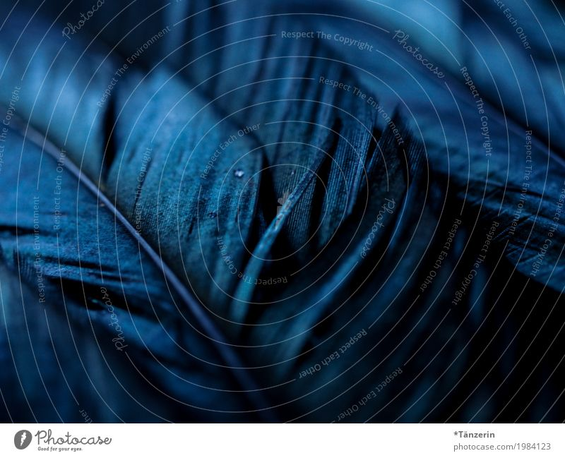 Blue Beautiful Animal Calm Black Gray Bird Esthetic Feather Silver