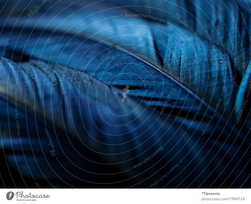 shades of black Animal Bird Wing Feather Esthetic Glittering Creepy Beautiful Blue Black Silver Romance Calm Moody Colour photo Subdued colour Close-up