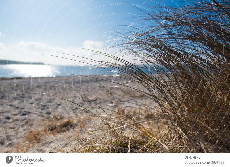 Beach near Laboe / Kiel Vacation & Travel Trip Far-off places Freedom Summer Summer vacation Sun Ocean Nature Landscape Water Sky Horizon Plant Wild plant