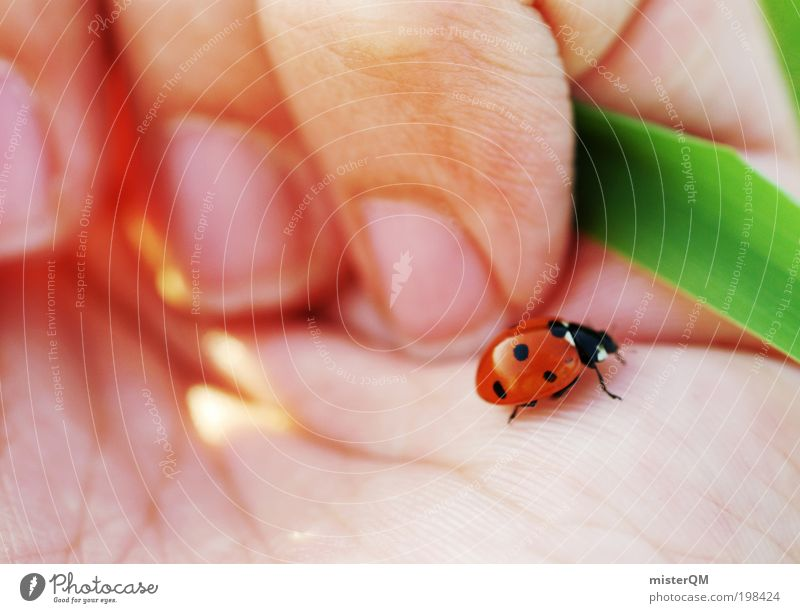 Little Things. Animal Effort Esthetic Contentment Life Ease Ladybird Happy Hope Congratulations Good luck charm Small Spotted Needy Wary Delicate Vulnerable