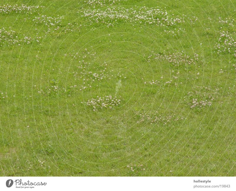 Green Plant Meadow Lawn