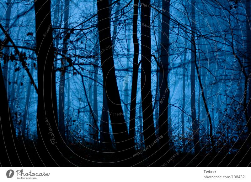 Nature Forest Dark Landscape Wood Fear Fog Fear of death Ghosts & Spectres  Horror Chase