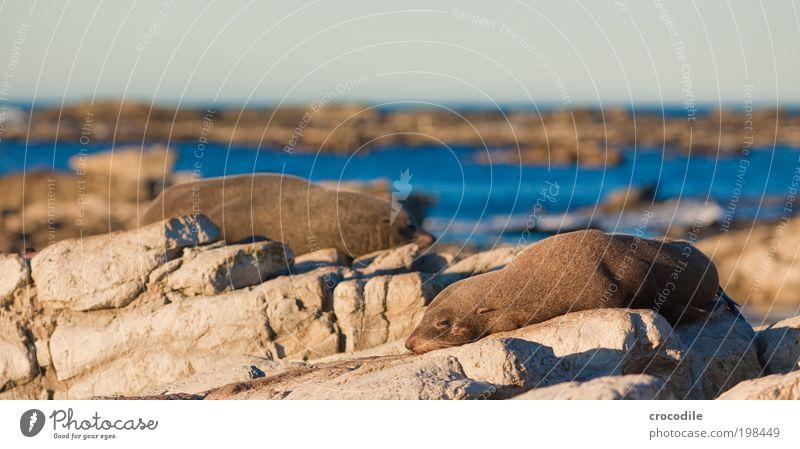 Sky Nature Water Beautiful Sun Beach Animal Environment Landscape Warmth Happy Coast Contentment Waves Rock Wild animal
