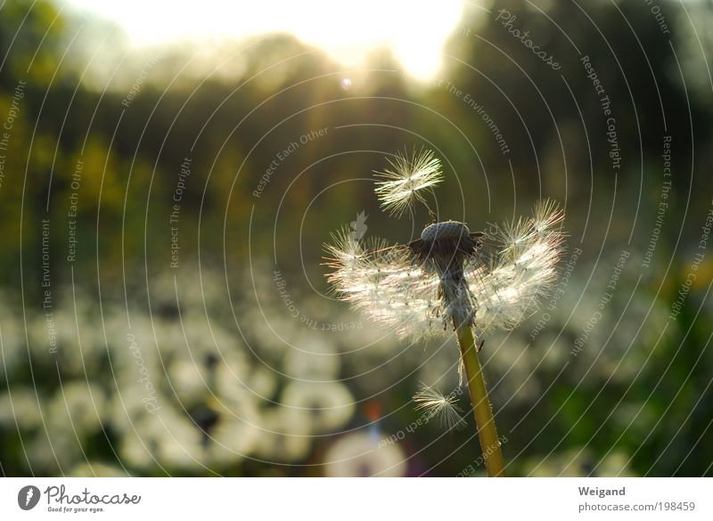 Flower Green Loneliness Hope Future Dandelion Retirement Dusk Decide Inspiration Closing time