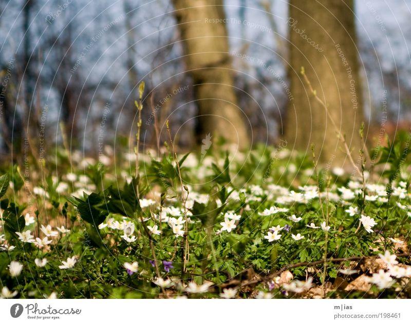 White Green Tree Plant Summer Flower Forest Environment Grass Garden Dream Time Power Contentment Wait Walking