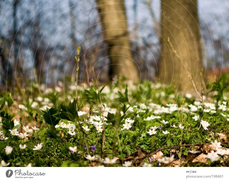 White Green Tree Plant Summer Flower Forest Environment Grass Garden Dream Time Power Contentment Wait Walking