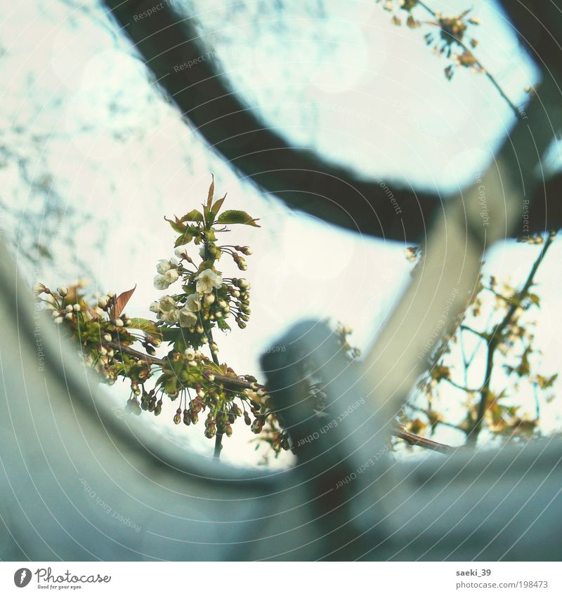 Nature Sky Tree Plant Blossom Spring Moody Simple Joie de vivre (Vitality) Brave Friendliness Positive Spring fever