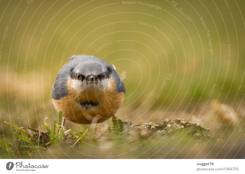 another picture and it's your turn! nuthatch Environment Nature Animal Spring Summer Autumn Beautiful weather Grass Garden Park Meadow Field Wild animal Bird