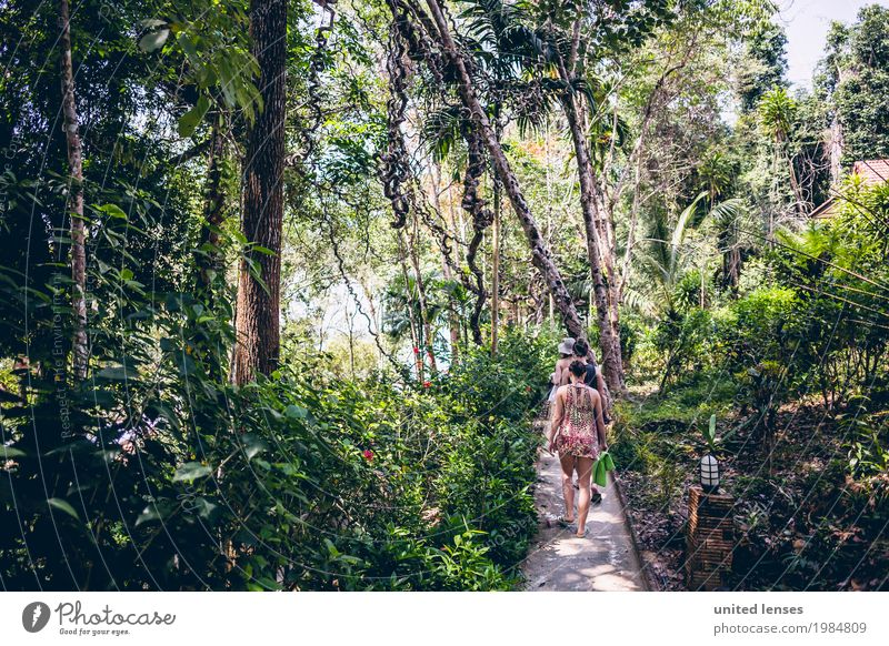 FF# Path in the jungle Environment Nature Climate Climate change Garden Park Forest Virgin forest Esthetic Baumweg primeval forest Green Thailand Lanes & trails