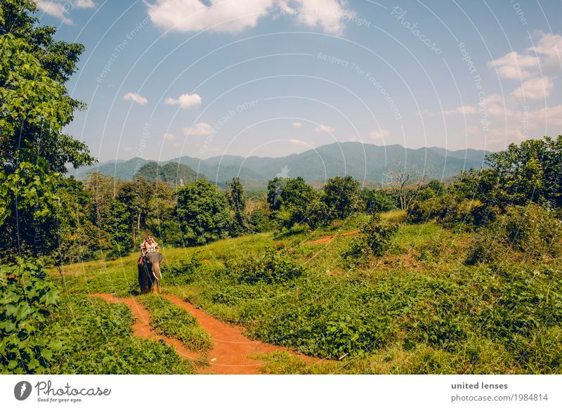 Vacation & Travel Green Tree Lanes & trails Art Tourism Esthetic Adventure Virgin forest Expedition Remote Foliage plant Elephant Vacation photo Green space
