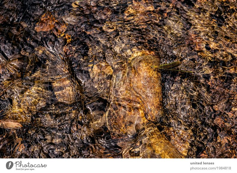 FF# Water Dragonfly Art Esthetic Dragonfly wings Dragonfly larva Surface of water Idyll Work of art Nature Nature reserve Natural phenomenon Experiencing nature