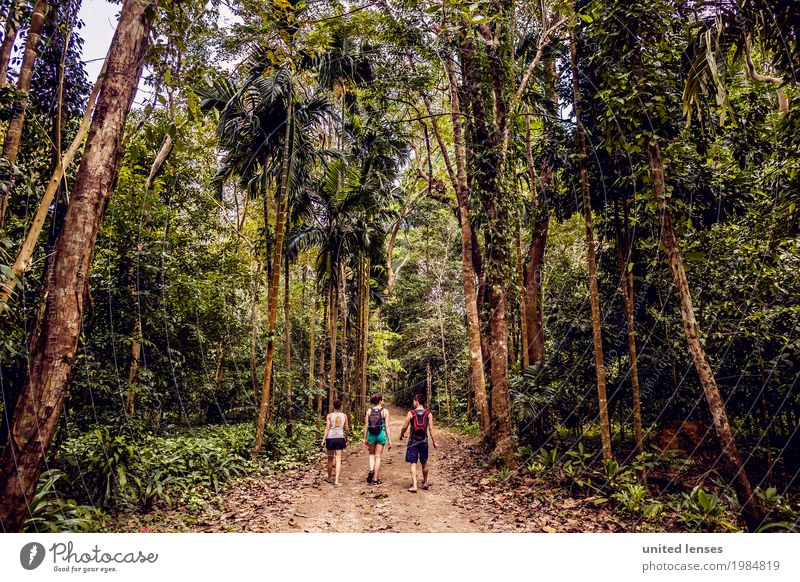 Nature Tree Forest Environment Lanes & trails Garden Hiking Esthetic Idyll Adventure Climate Discover Virgin forest Climate change Thailand Untouched