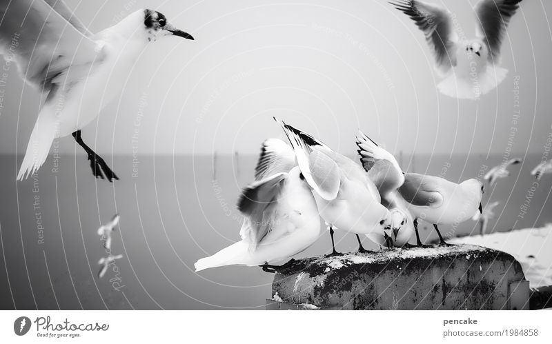 Water Flying Group of animals Elements Lakeside Seagull To feed Muddled Fight Lake Constance