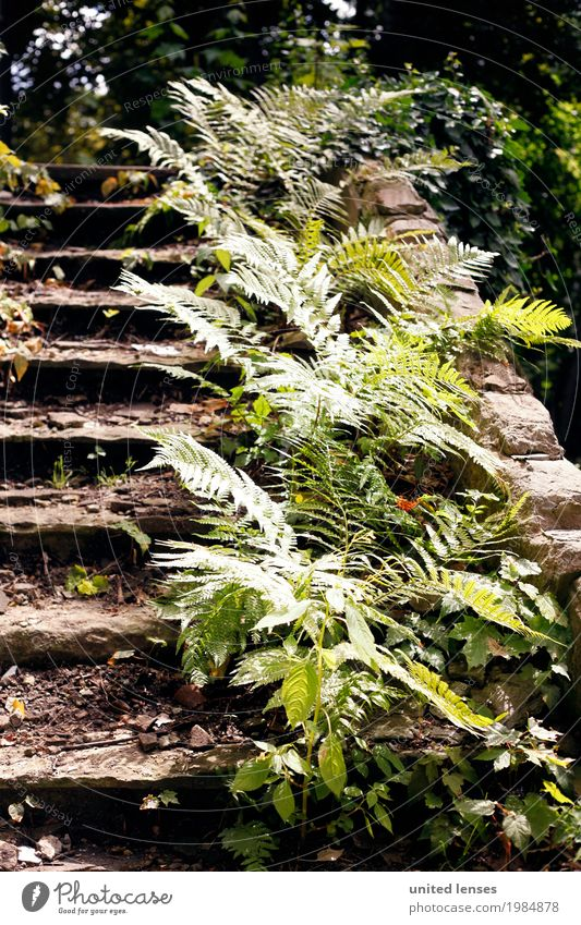 AK# Fern II Environment Nature Garden Park Esthetic Pteridopsida Fern leaf Green Stairs Landing Overgrown Ruin Shabby Wayside Colour photo Subdued colour