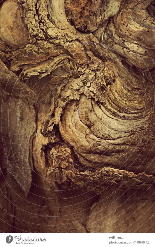 shift change Tree bark cortex Tree trunk Old Brown Wood Substitute Nature Decline Colour photo Exterior shot Structures and shapes