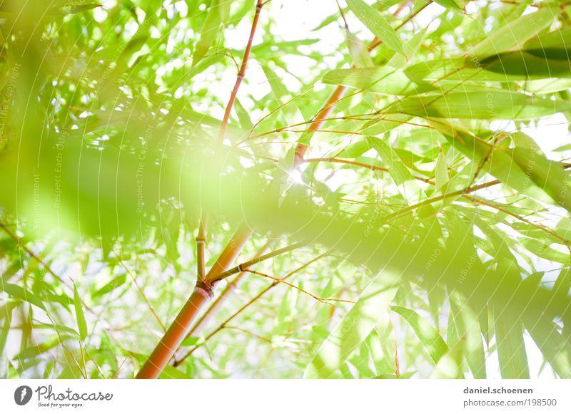 Nature White Sun Green Plant Summer Animal Spring Park Bright Environment Bushes Beautiful weather Sunbeam Bamboo Foliage plant
