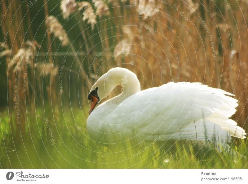 Nature Beautiful Plant Summer Animal Meadow Grass Spring Lake Warmth Landscape Bright Bird Weather Environment Esthetic