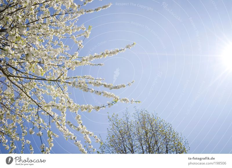 Sky Nature Tree Plant Happy Warmth Blossom Spring Air Park Happiness Growth Branch Warm-heartedness Blossoming Beautiful weather