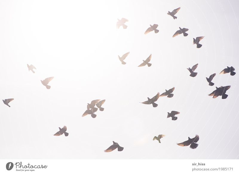 Sky White Gray Brown Flying Above Bright Horizon Beginning Dangerous Wing Speed Group of animals Departure Watchfulness Under