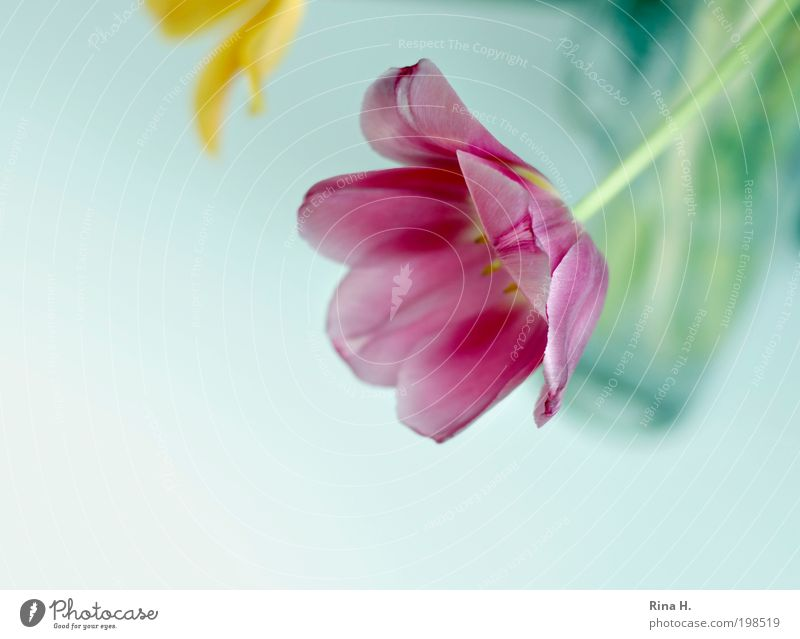 Beautiful Flower Green Plant Calm Yellow Style Spring Contentment Bright Pink Elegant Happiness Esthetic Decoration Transience