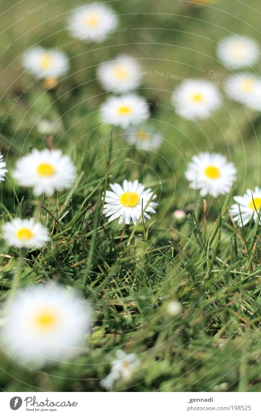 anton Environment Nature Landscape Plant Earth Climate Beautiful weather Flower Grass Blossom Foliage plant Daisy Flower meadow Meadow Meadow flower Gold Green