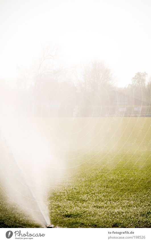 Lawn Ballet II Stands Sporting Complex Football pitch Water Drops of water Sun Spring Summer Beautiful weather Fog Rain Warmth Drought Grass Grass surface