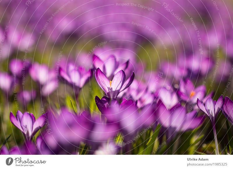 Nature Plant Beautiful Flower Warmth Blossom Spring Interior design Style Garden Exceptional Park Illuminate Glittering Elegant Decoration