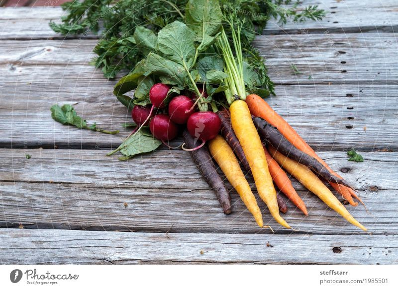Organic red radishes and carrots Food Vegetable Nutrition Eating Organic produce Vegetarian diet Healthy Healthy Eating Plant Agricultural crop Growth Natural