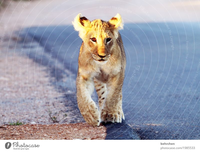 Vacation & Travel Beautiful Animal Far-off places Playing Freedom Tourism Wild Trip Wild animal Adventure Observe Curiosity Pelt Hunting Animal face