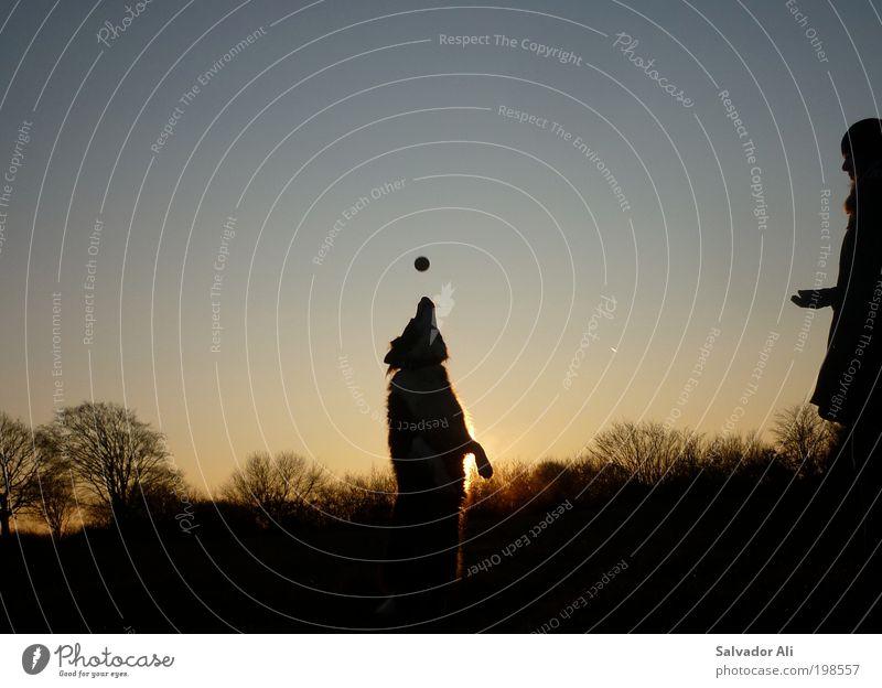 Blue Tree Joy Animal Playing Landscape Happy Dog Field Gold Ball Soft Joie de vivre (Vitality) Acrobat Snout Catch