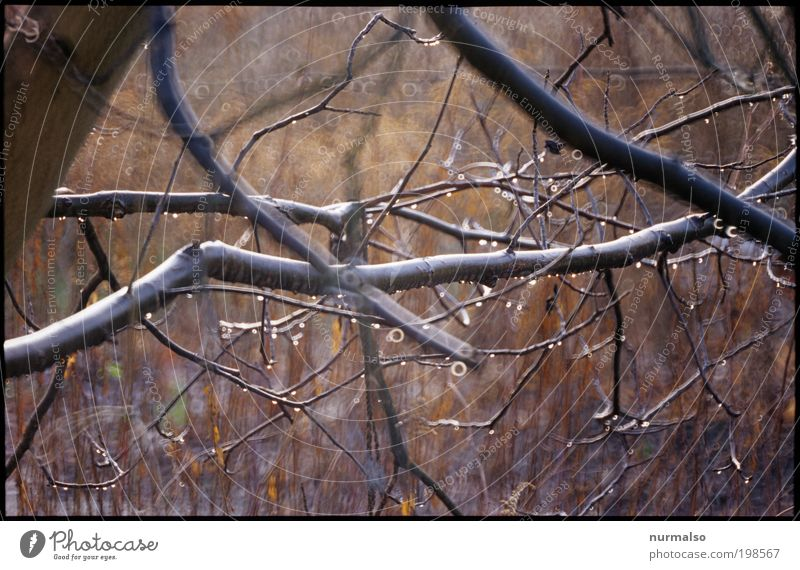 Nature Tree Plant Joy Animal Far-off places Autumn Dream Rain Landscape Art Glittering Round Bushes Climate Observe