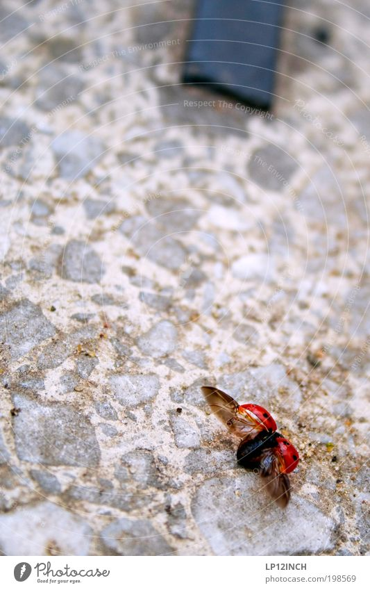 - spread out - - Environment Nature Summer Aviation Airport Airfield Beetle 1 Animal Stone Flying Crawl Free Friendliness Beautiful Red Happiness Contentment