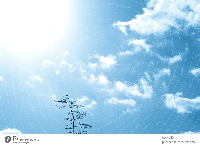 Nature Sky Tree Sun Clouds Emotions Happy Air Joie de vivre (Vitality) Sympathy Willpower Spring fever