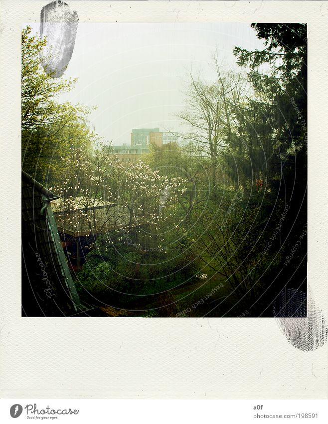 Tree Plant Clouds Dark Garden Think Spring Contentment Fog Illuminate Trashy Well-being Polaroid Town