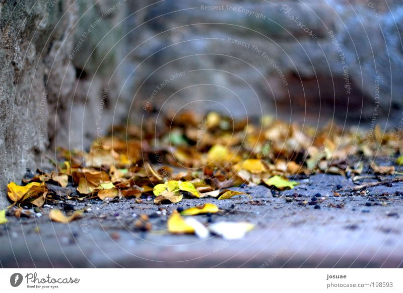 Nature Old Green Sun Leaf Calm Yellow Environment Autumn Wall (building) Garden Wall (barrier) Park Brown Dirty Stairs