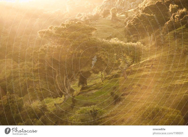 Nature Plant Sun Tree Landscape Forest Mountain Environment Warmth Grass Rock Contentment Bushes Esthetic Happiness Fantastic