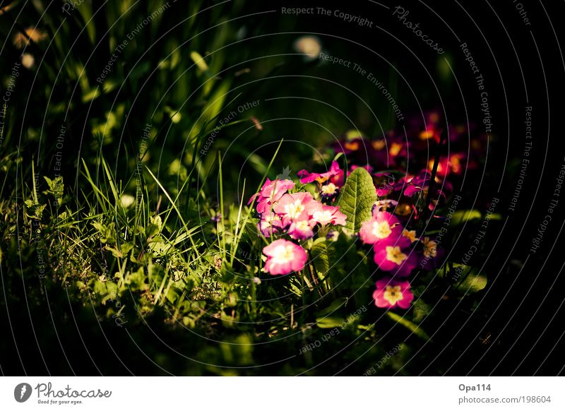 Alice in Wonderland Environment Nature Landscape Plant Animal Earth Sunlight Spring Summer Beautiful weather Flower Grass Bushes Moss Blossom Foliage plant