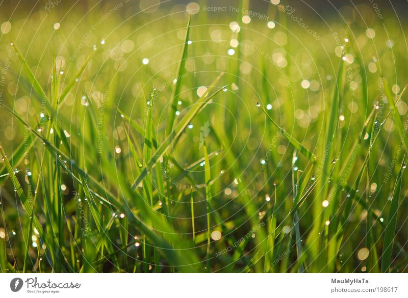 Bathed in Rosa Nature Plant Elements Water Drops of water Sun Sunlight Climate Rain Grass Garden Park Fantastic Free Funny Original Positive Yellow Gold Gray
