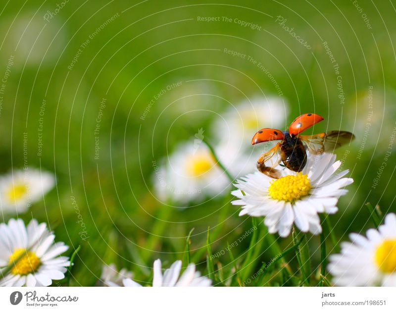 May Plant Animal Spring Summer Beautiful weather Flower Grass Garden Park Meadow Wild animal Beetle 1 Flying Free Natural Joie de vivre (Vitality) Spring fever
